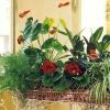 6 Домашніх рослин, що приносять удачу і багатство власникам!