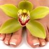 Грибок нігтів і його лікування
