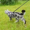 Гуляємо з кішками: особливості поведінки
