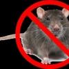 Характеристика хімічних, біологічних і електричних засобів від мишей