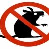 Ефективні засоби від щурів