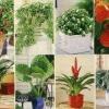 Кімнатні рослини - натуральні очищувачі повітря