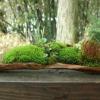 Міні сад в кам`яній чаші
