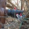 Осіння обрізка дерев