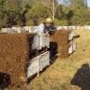Основні помилки початківців бджолярів