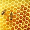 Бджола і мед