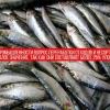 Процес переробки рибних відходів