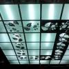 Розкішні стелі зі скла