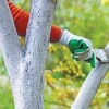 Садово-городні роботи в жовтні