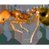 Способи позбавлення від мурашок в квартирі рудих