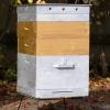 Догляд за бджолами в двухкорпусних вуликах