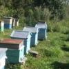 Догляд за бджолами в серпні