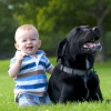 Вибираємо собаку для дитини