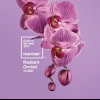 """Оголошено тренд-колір 2014 року - """"промениста орхідея"""""""