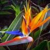 """Світильник за мотивами """"квітки райського птаха"""""""